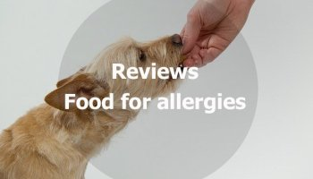 10 homemade dog food recipes how to make your own dog food best dog food for allergies reviews recommendations forumfinder Choice Image