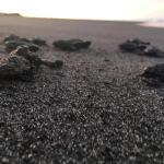 Las tortugas parlama fueron liberadas en las playas de Tahuexco y Churirin del municipio de Mazatenango. (Foto: Cristian Soto)