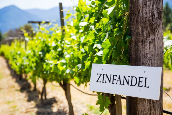 Zinfandel grapes are grown at this winery and vineyard in Southern Oregon.