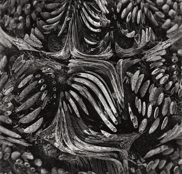 sandra almeida diseño grafico vigo galicia exo - Axi Weinkle