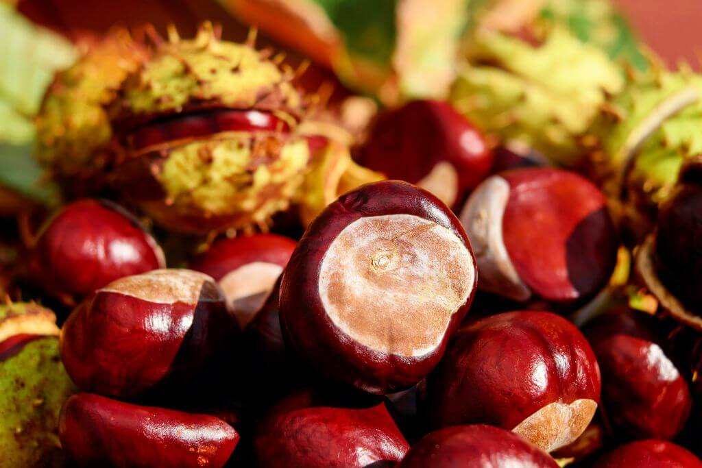 Chestnuts, Autumn Holidays