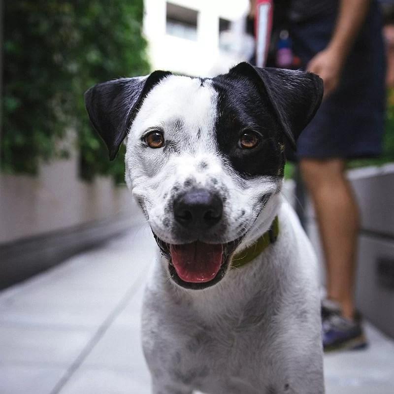choisir-un chien-blog-crocandiz