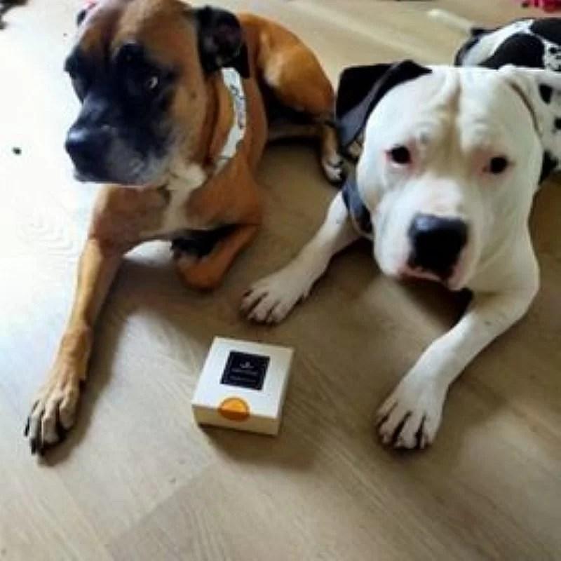 chiens-gourmands-club-crocandiz