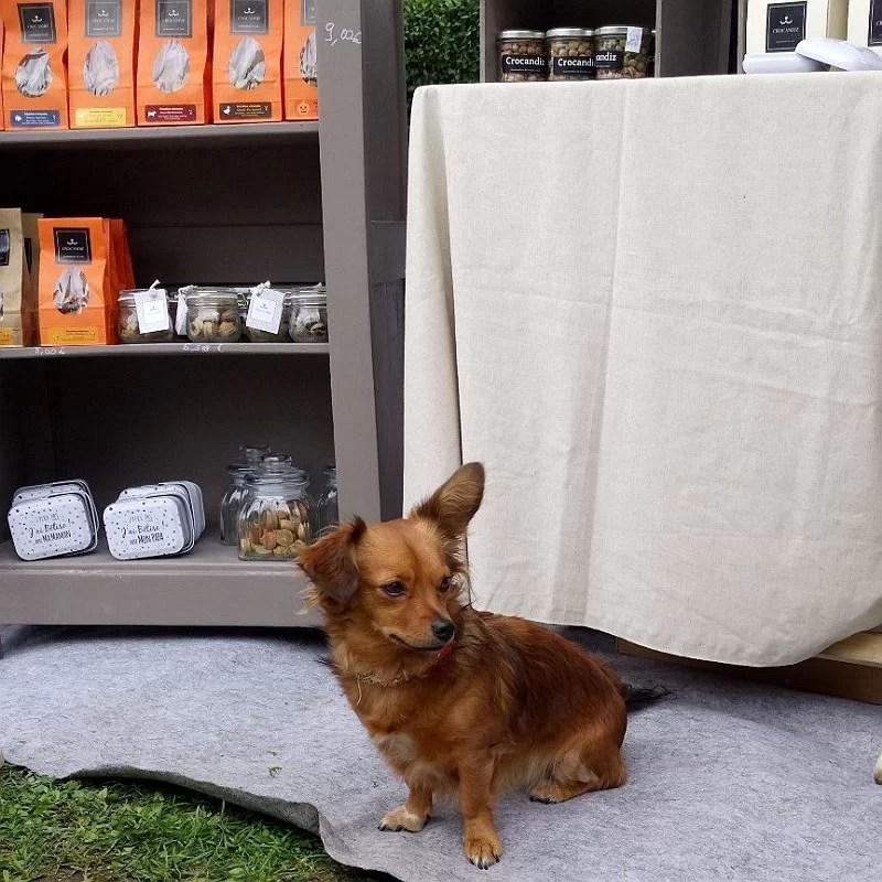 chien-gourmand-club-crocandiz-Luna-croisé