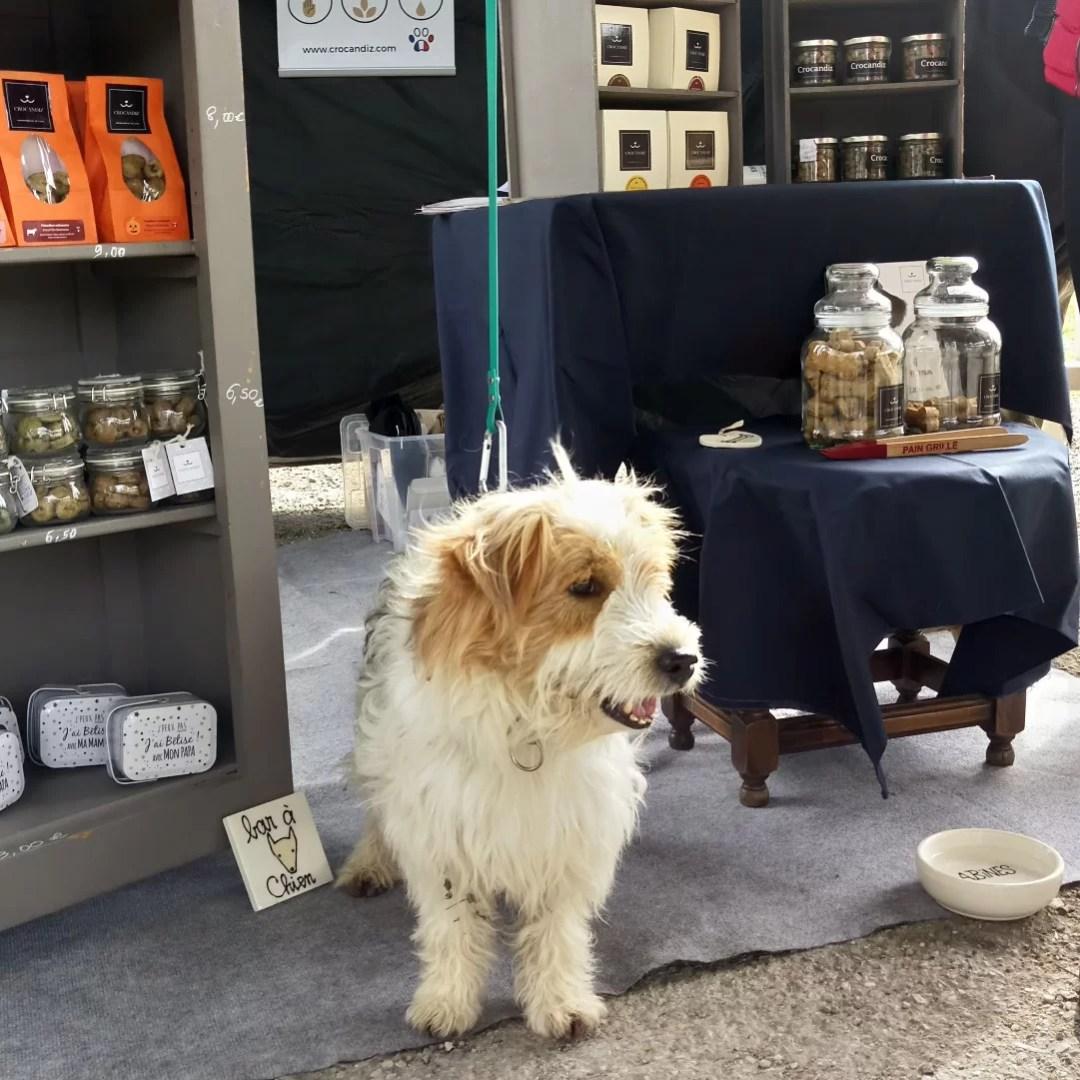 Paco-chien-croisé-stand-crocandiz