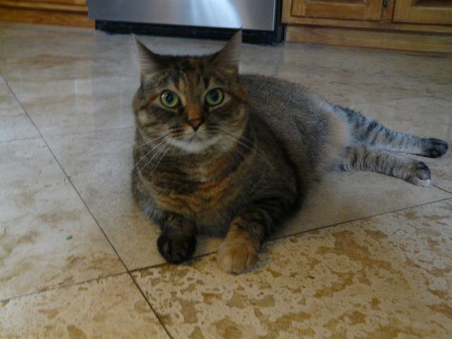 guilty cat