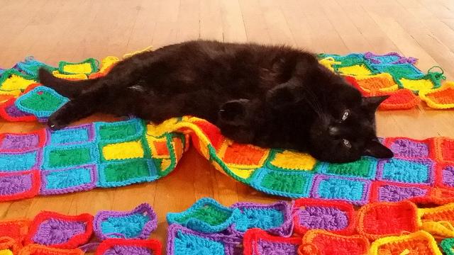 crochet cat inspection