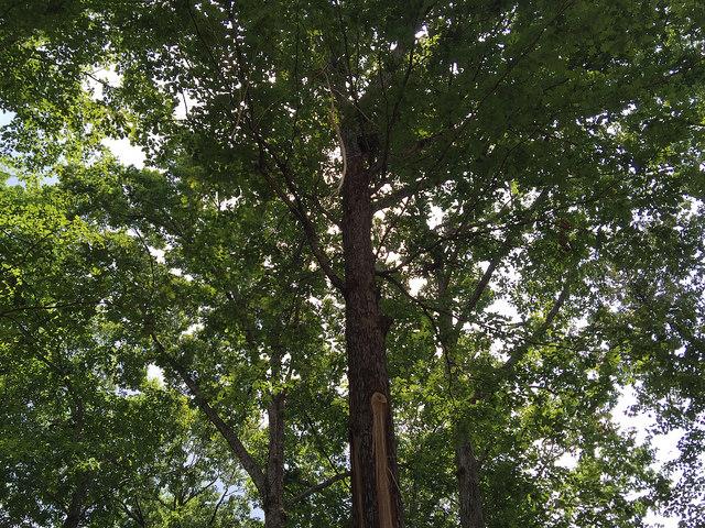 tree hit by lightning July 2015