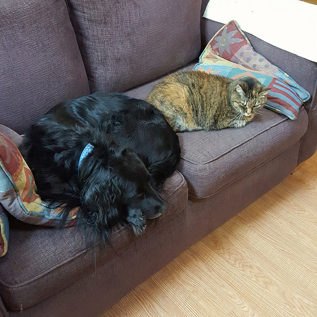 dog and cat on a sofa