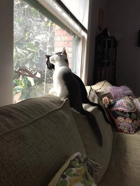 Marvin and Willie survey their new neighborhood