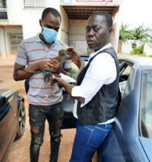[Côte d'Ivoire/Lutte contre le braconnage] Des singeons sauvés d'une triste fin grâce à la contribution de l'Ong NOFNA