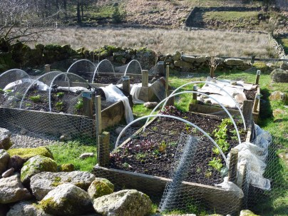 The sorry state of some of our vegetable beds.