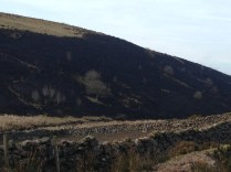The charred hillside after the fires were finished.