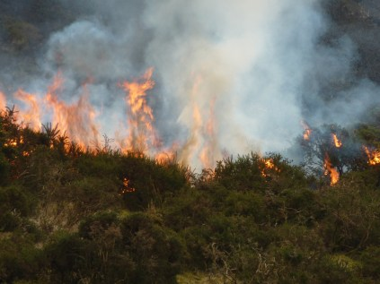 The dense smoke from the burning gorse plumes up with the flames.