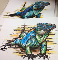 Cayman Blue Iguana (Blue Dragon). Copic on printer paper. 2016