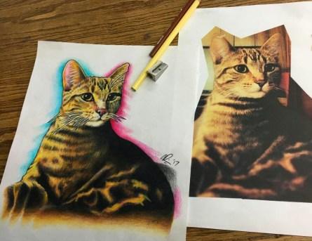 'Chicken the Cat' portrait. Pencil crayon on printer paper. 2017