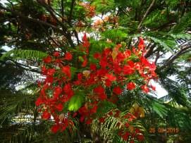 Antigua DSC01351