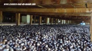 Escale à St Georges île de la Grenade séchage des noix de muscade