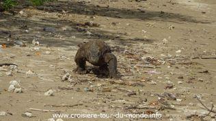 Croisière tour du monde 2019 Komodo Island Indonésie 111