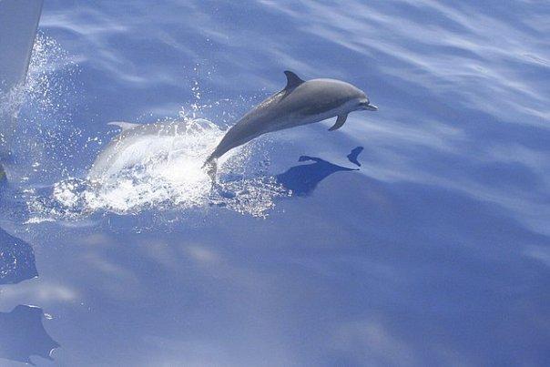 location de catamaran aux Antilles