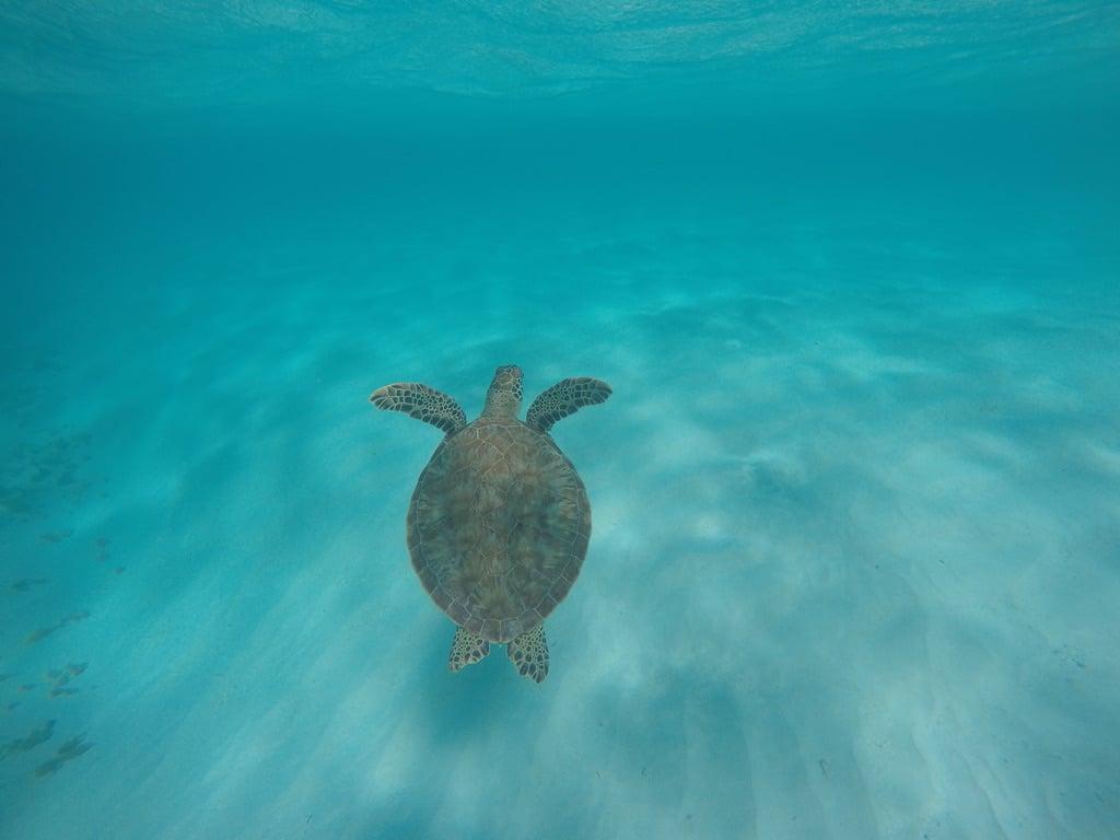 les tortues tropicale