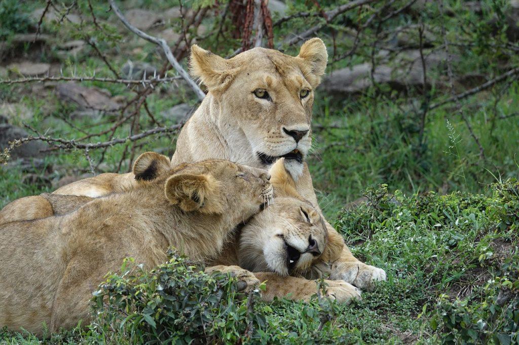 Leoni safari Kenya