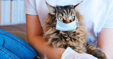 Coronavirusul se poate transmite de la oameni la câini şi pisici