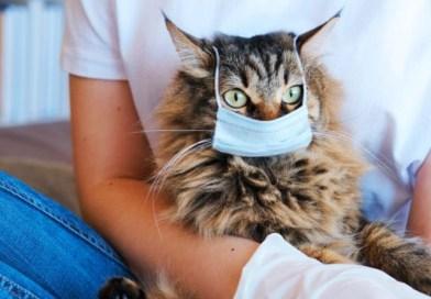 Bolnavii de COVID-19 îşi pot infecta animalele de companie