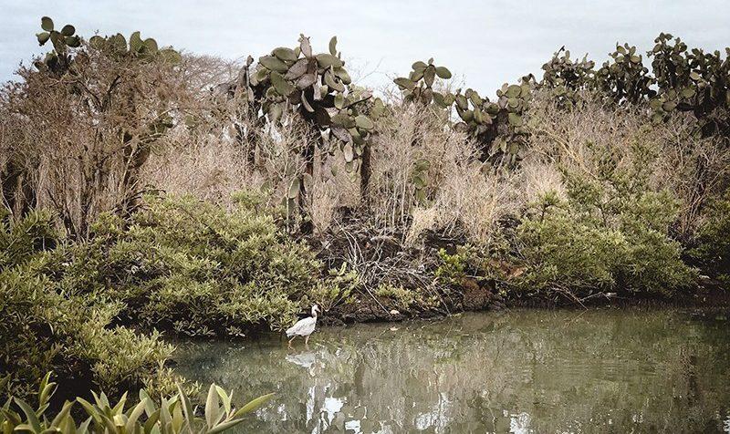 Lugares imprescindibles de Santa Cruz en Galápagos