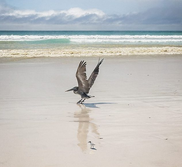 Que ver en Santa Cruz de Galápagos