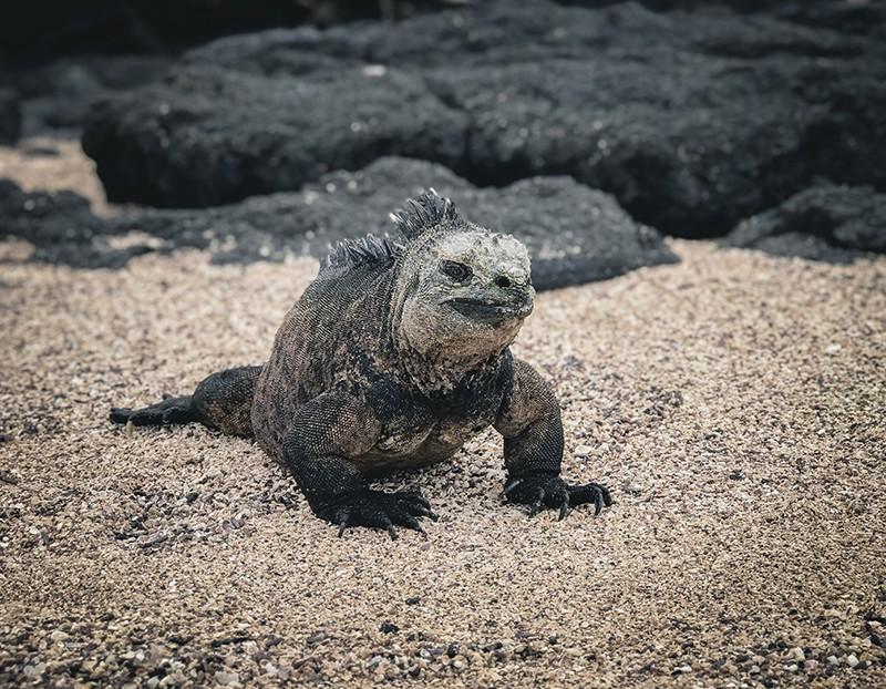 Sitios turísticos en isla Isabela, Galápagos