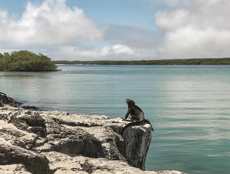 Consejos para viajar a Galápagos