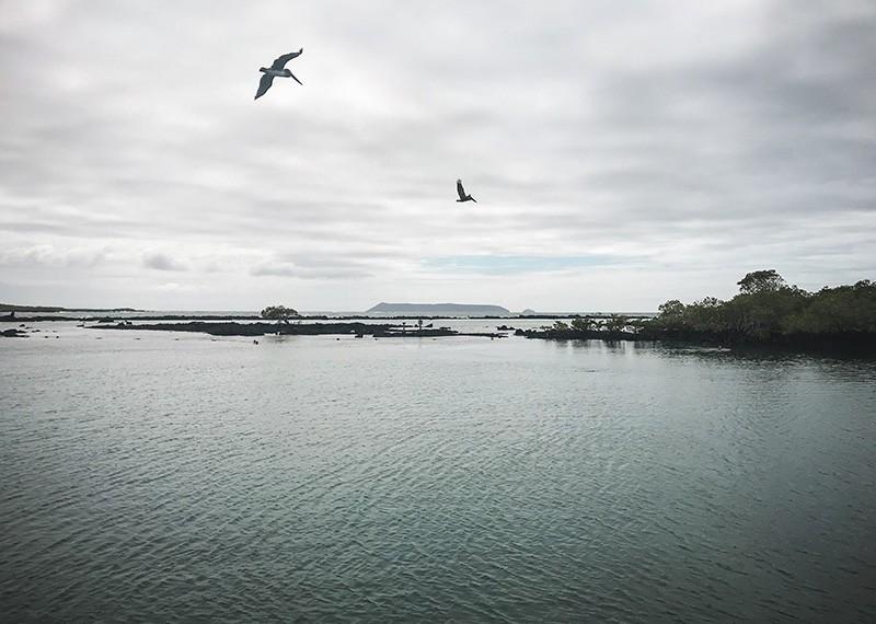 Consejos para viajar a Galápagos por libre