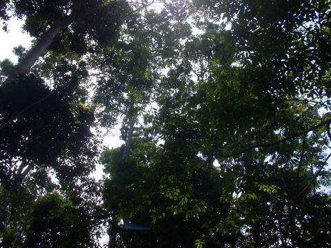 As árvores sustentam o céu.