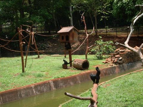 Macacadas