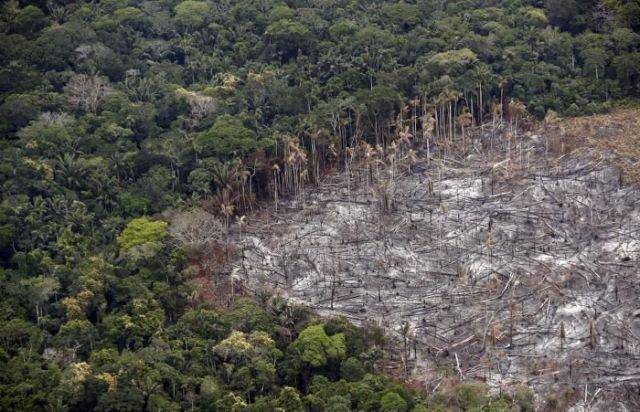 En 13 años se ha deforestado en el mundo un área equivalente a California