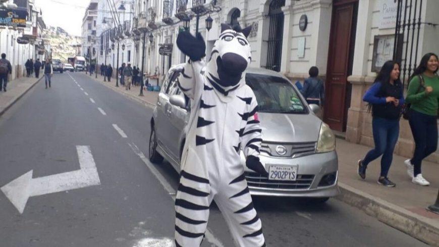 Cebras en Sucre