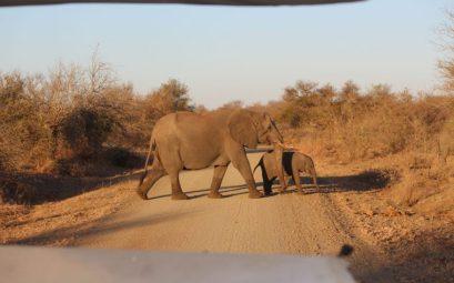 Elefante y cría, Mahango,Namibia