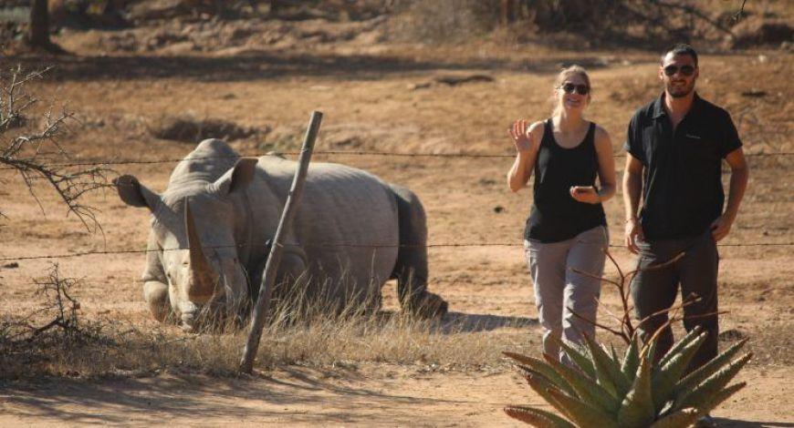 delante de un rinoceronte blanco en Hlane, Swazilandia