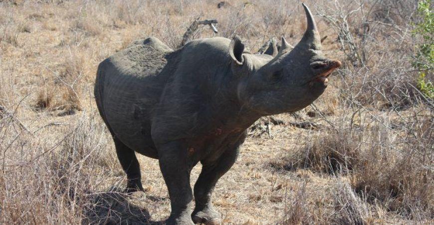 rinoceronte negro, Mkhaya, Swazilandia