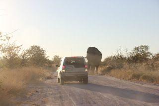 Elefantes en la carretera y coche retrocediendo durante nuestra visita a Etosha