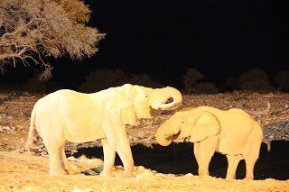 Elefantes durante nuestra visita a Etosha