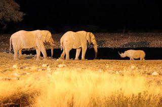 Elefantes de noche, visita a Etosha
