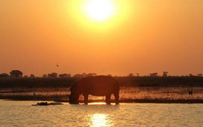 hipopotamo sudafrica