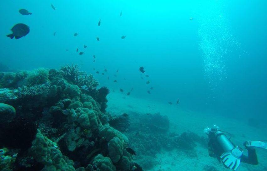Bucear en Komodo, Indonesia