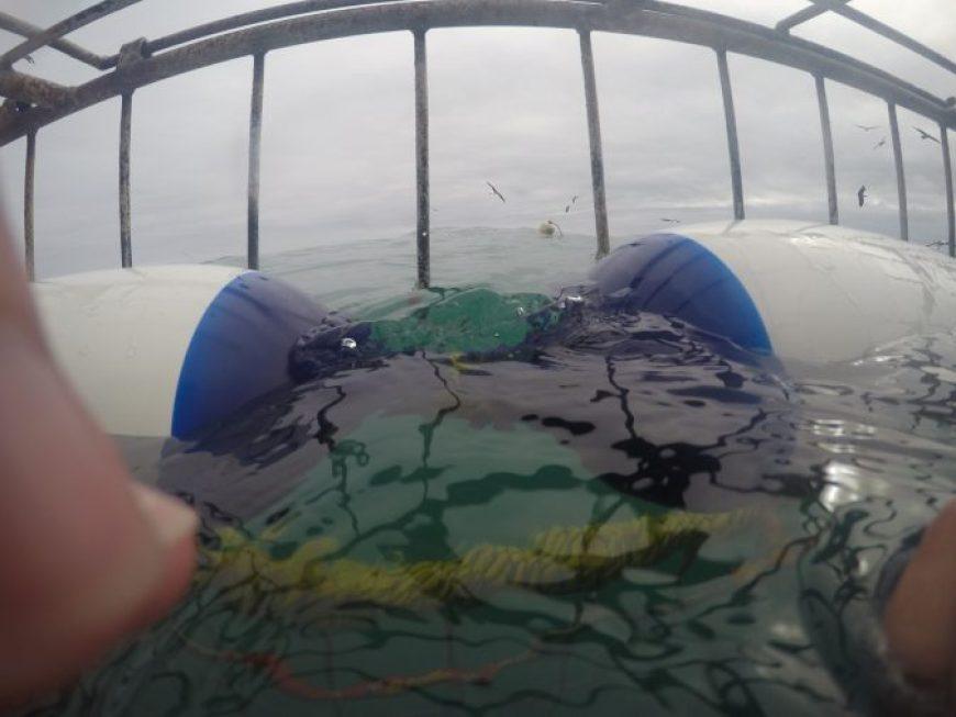 interior de la jaula con el gran tiburón blanco en sudáfrica
