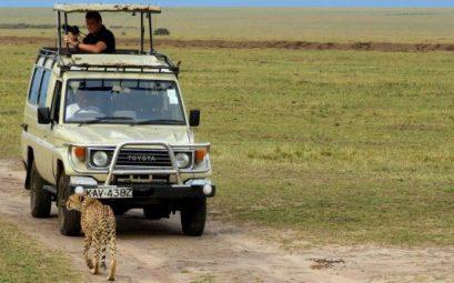 Safari todoterreno