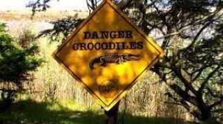 """Cartel de """"Danger Crocodiles"""""""