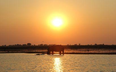 Puesta de sol con hipopótamo en el Chobe