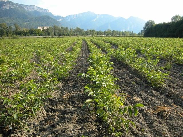 Campania felix la nostra regione subito dopo la Puglia ha registrato il miglior incremento nell'export agroalimentare-1